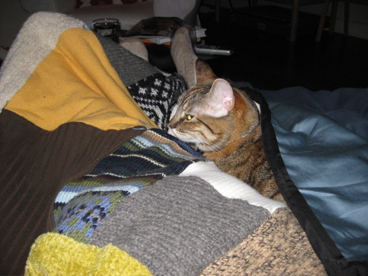 Cuddles with cleo and the newly finished sweater quilt