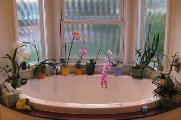 Orchids 02:01:10