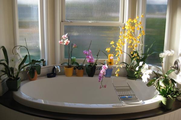 Orchids 03:05:10
