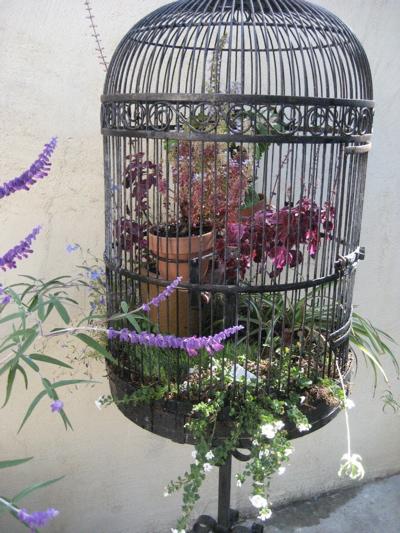 Birdcage revisited